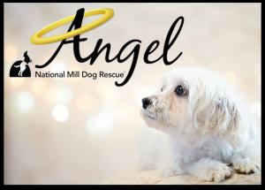 NMDR Angel